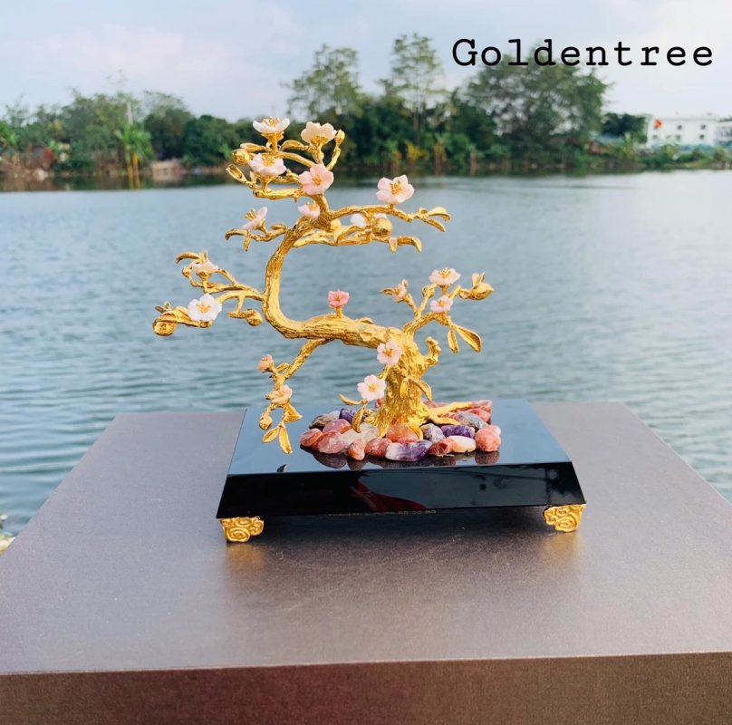 Cây hoa đào ốc mạ vàng
