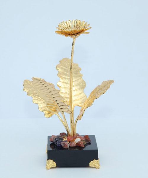 Cây hoa đồng tiền mạ vàng