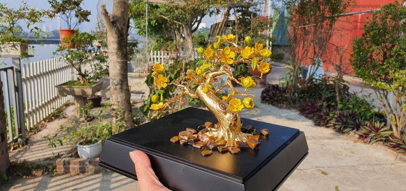 Cây hoa mai mạ vàng HM02